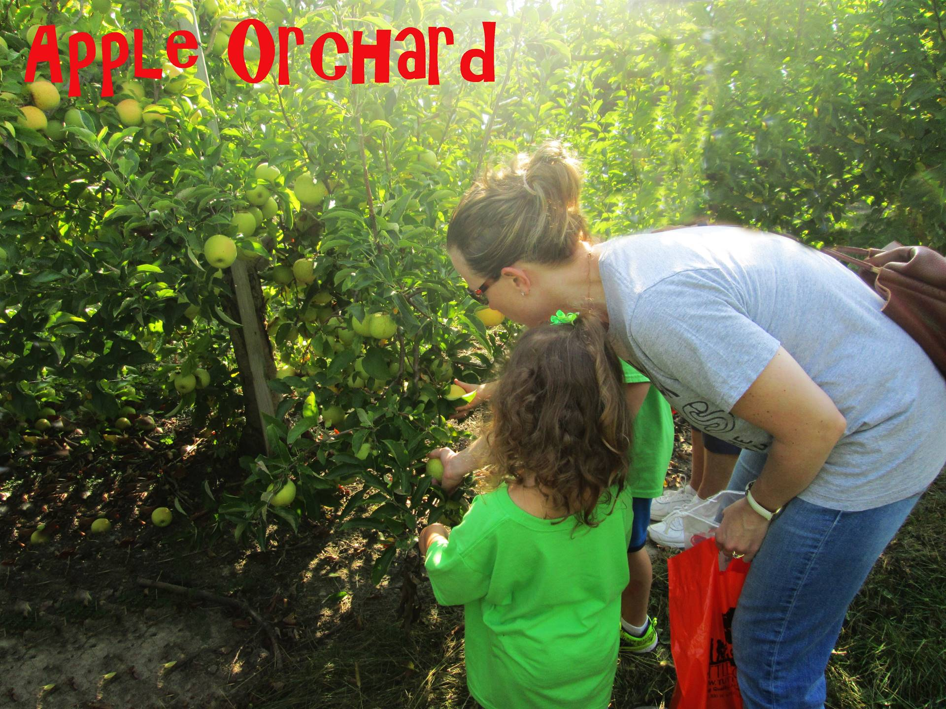 Apple orchard visit